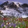 Mal, borë dhe lule