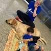 Prekëse, djaloshi me autizëm gjen paqe tek qeni