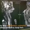 Vogëlushja me katër këmbë i nënshtrohet operacionit!