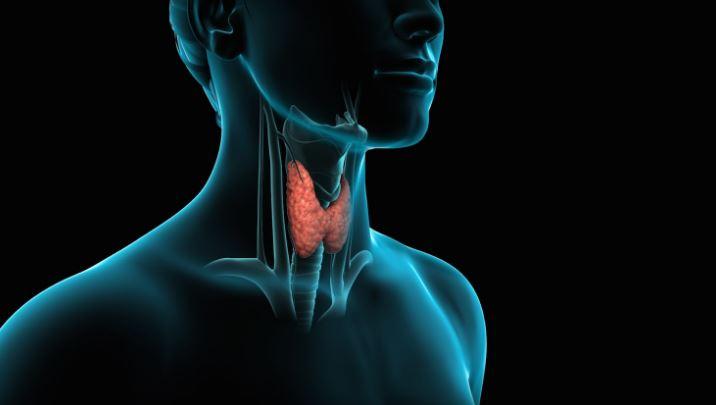 Si mund të kuptojmë që tiroidet nuk po funksionojnë siç duhet (Video)